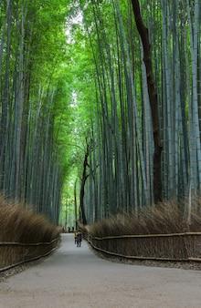 Зеленый бамбуковый лес в арасияма в киото, япония