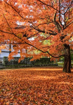 京都の東福寺で紅葉