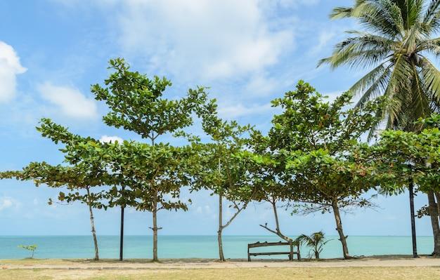 Морской пейзаж с тропическим миндальным деревом на пляже