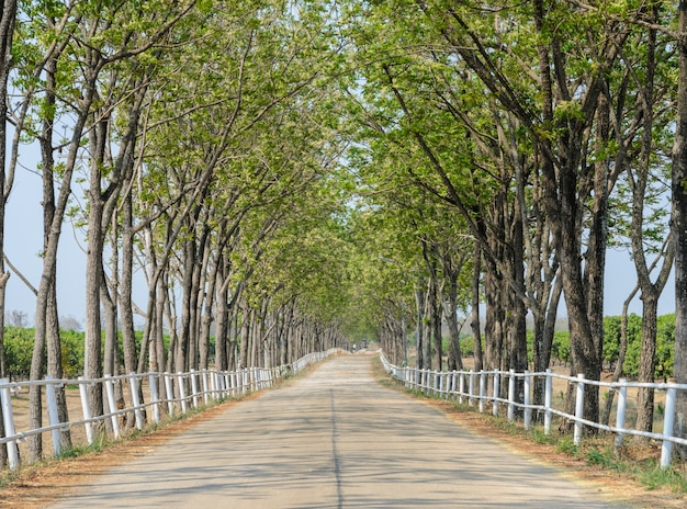 並木の農場への道