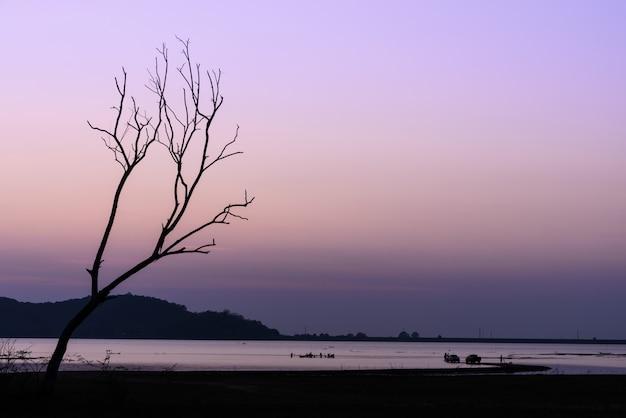 美しいシルエット乾燥木と夕暮れの空の湖