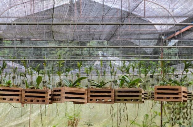保育園の蘭の植物