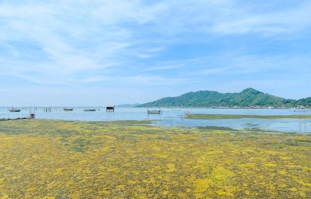 Цветение водорослей в тропическом океане, таиланд