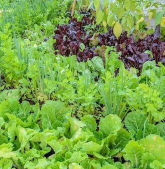 家の裏庭にある有機野菜植物。環境に優しい庭園