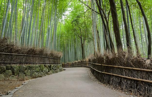 京都の嵐山の緑の竹林