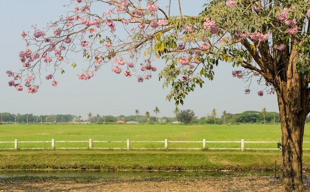 緑の野原の前にピンクのトランペットの花