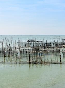 タイの海産魚の養殖