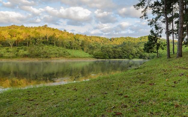 湖の美しい松の木の反射