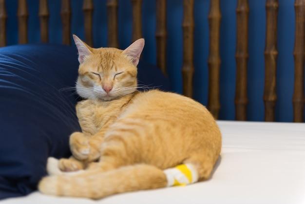 Больной желтый кот с повязкой на хвосте спит в спальне