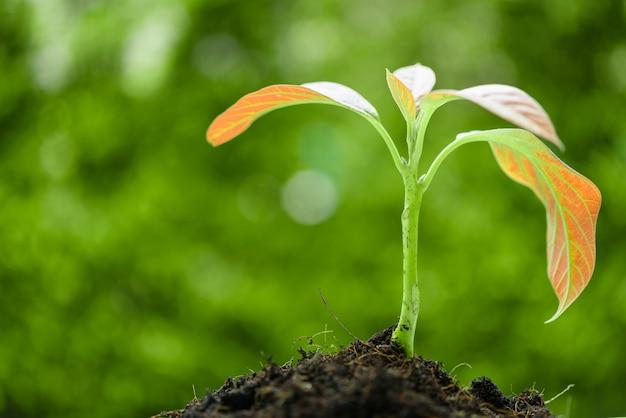 太陽の光の中で土から育つ若い生まれたての植物