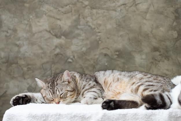 足の睡眠不足のかわいいトラ猫を閉じる