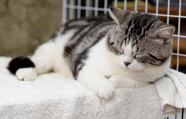 Черно-белый милый кот спит на уютной белой ткани