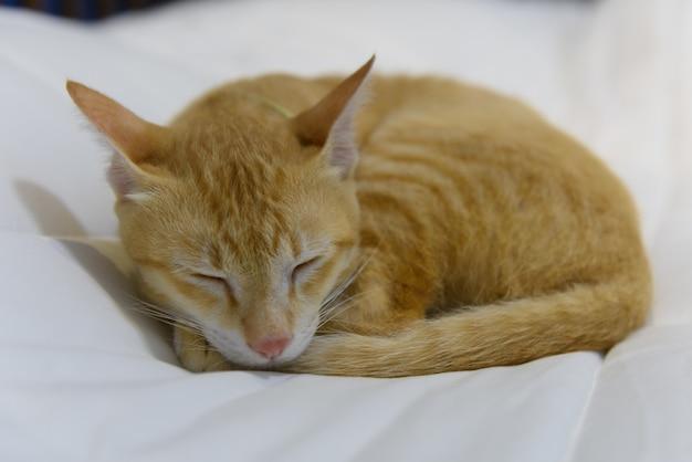 かわいい黄色い猫が白い居心地の良いベッドで眠る