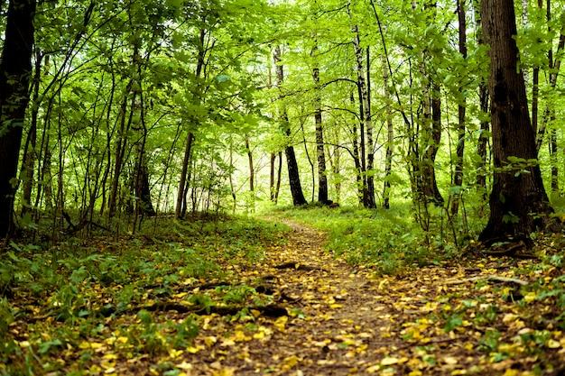 黄色の落ち葉の背景を持つフォレスト内の秋の木々