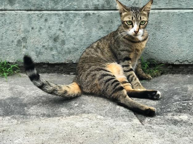 かわいい猫が床に座っています。