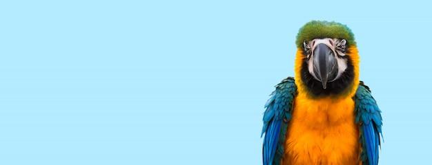 青のコンゴウインコのオウム
