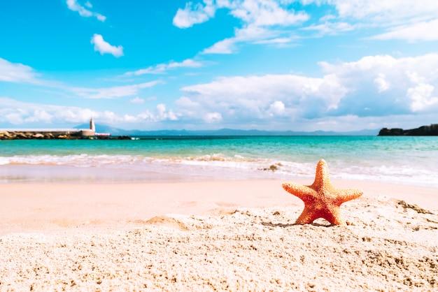 Летний пляж с морскими звездами