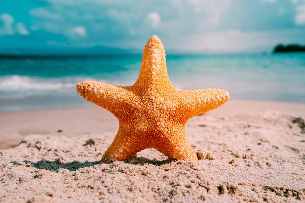 Пляж фон с морскими звездами