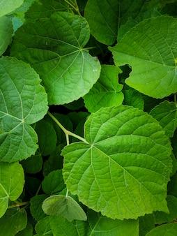 Естественный фон из зеленых листьев