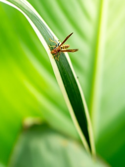 Крупным планом осы на зеленом фоне