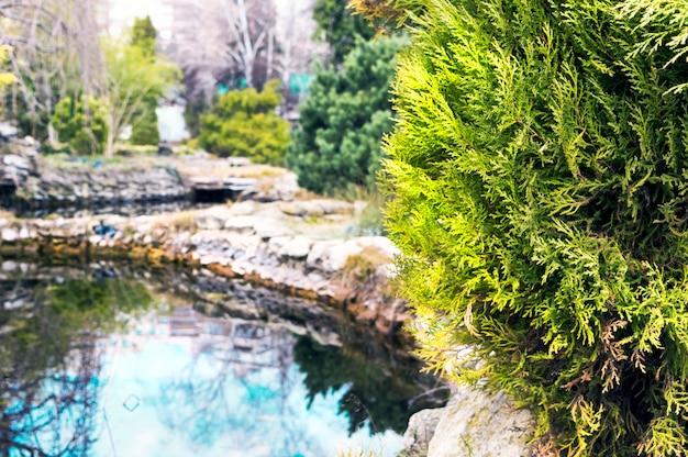 早春の植物園の小さな湖