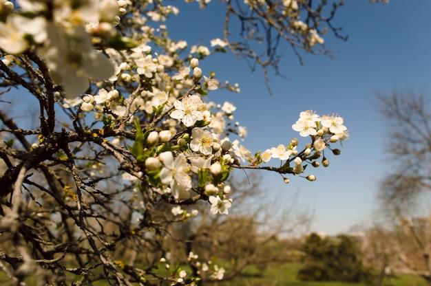 庭を春します。桜の花
