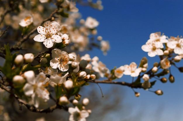 春の桜と青い空を背景に
