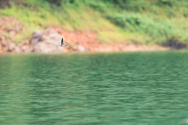 シラサギ鳥がハラバラ野生生物保護区で水の上を飛ぶ