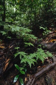 ハラバラ野生生物保護区のマラヤ熱帯雨林の緑豊かな植生