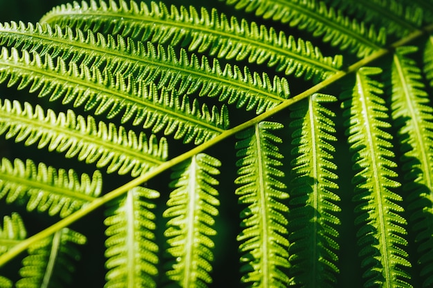 緑色のシダの葉の背景を太陽に閉じます。