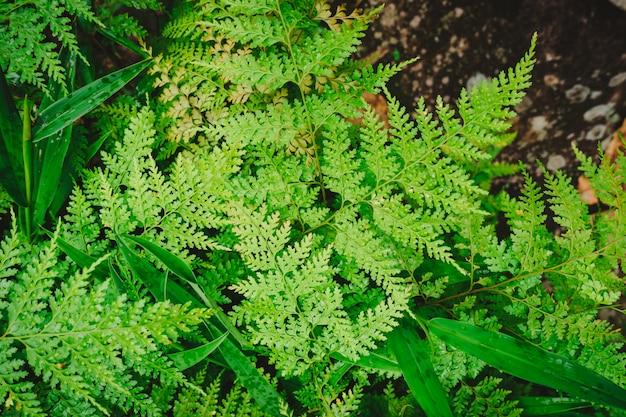 緑のシダの葉の背景。