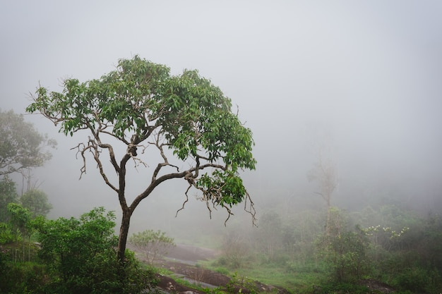蒸気と湿気のある霧の雨林。