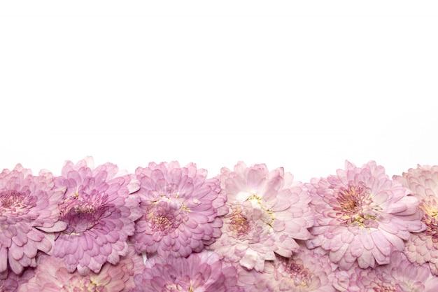 ピンクの花の背景は白で隔離されます。抽象的な花が咲きます。