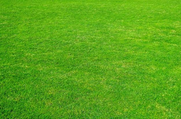 緑の芝生のフィールドの背景。緑の芝生のパターンと質感。背景の緑の芝生。