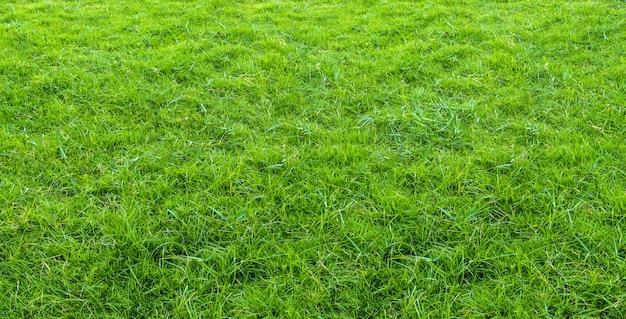 Текстура зеленой травы от поля.