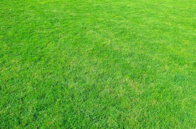 緑豊かな公共公園の芝生フィールドの風景は自然の背景として使用します。