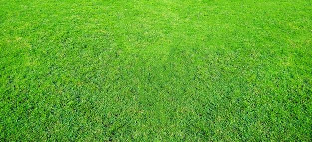 緑豊かな公共公園の芝生フィールドの風景は、自然の背景として使用します。フィールドからの緑の芝生のテクスチャです。