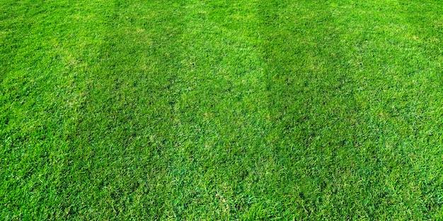 サッカーとフットボールのスポーツのための緑の芝生フィールドの背景。緑の芝生テクスチャ背景。