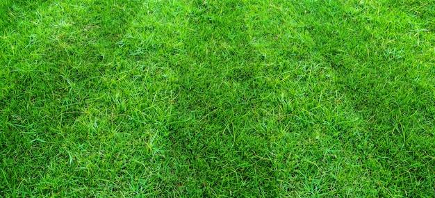 Предпосылка поля зеленой травы для спорт футбола и футбола. зеленый газон текстуру фона.