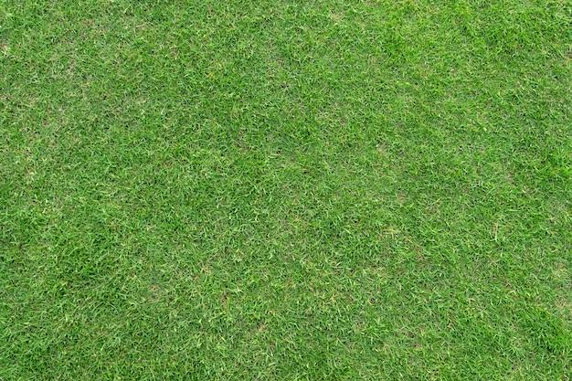 緑の草のパターンと背景のテクスチャ。