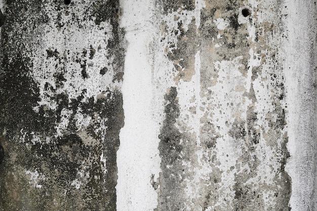 グラステクスチャとモス緑色の藻、テクスチャの背景とコンクリートの壁