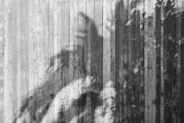 生のコンクリート壁の木の影