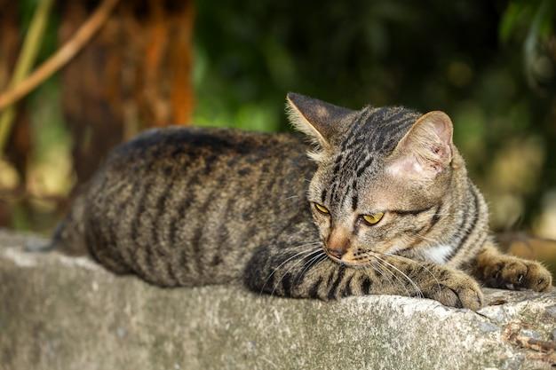 庭の近くの古い壁に灰色の猫を閉じる