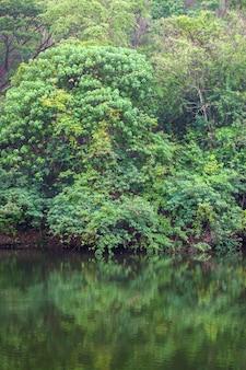森の木は壁紙の日没前に水を反映しています