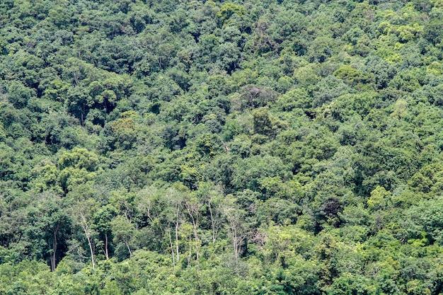 タイの自然の中で緑の木の森