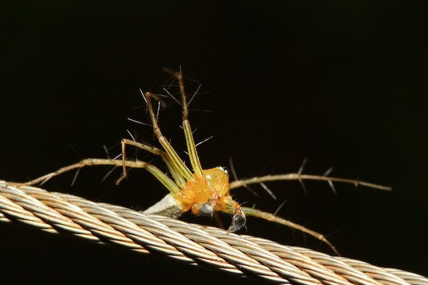 黄色のクモ