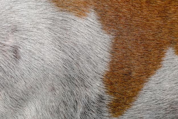 Крупным планом коричневая и белая кожа собаки