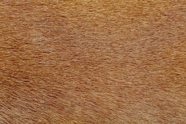 テクスチャの茶色の犬の皮を閉じる