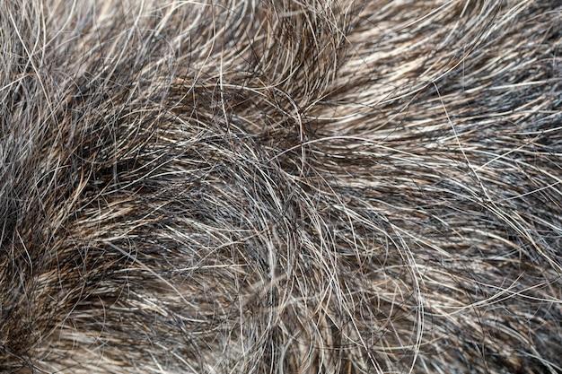 背景の灰色の犬の皮を閉じる