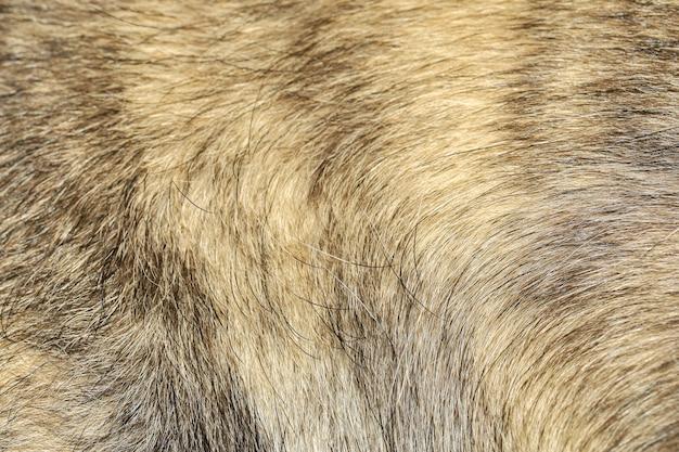 灰色の犬の毛皮のテクスチャ背景を閉じる